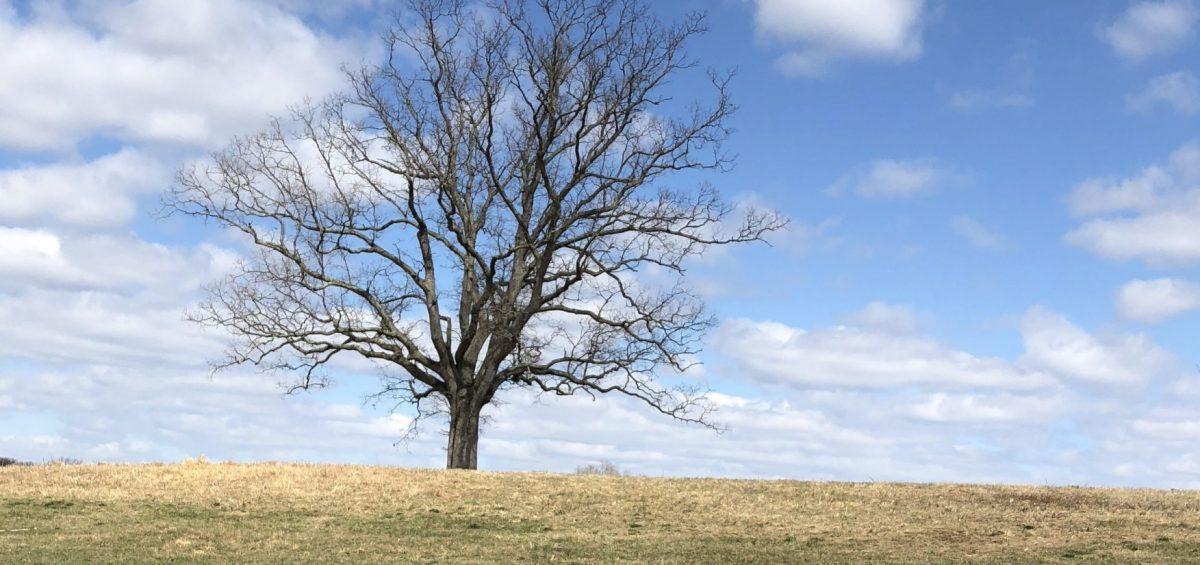 Evergreen versus Deciduous - F&M Contractors